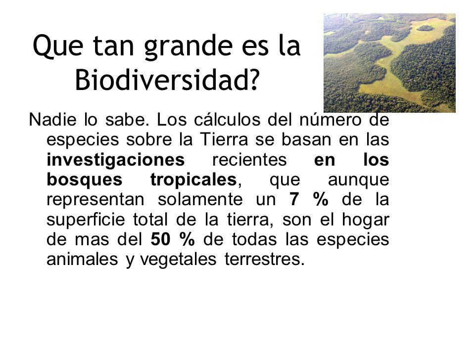 Que tan grande es la Biodiversidad? Nadie lo sabe. Los cálculos del número de especies sobre la Tierra se basan en las investigaciones recientes en lo