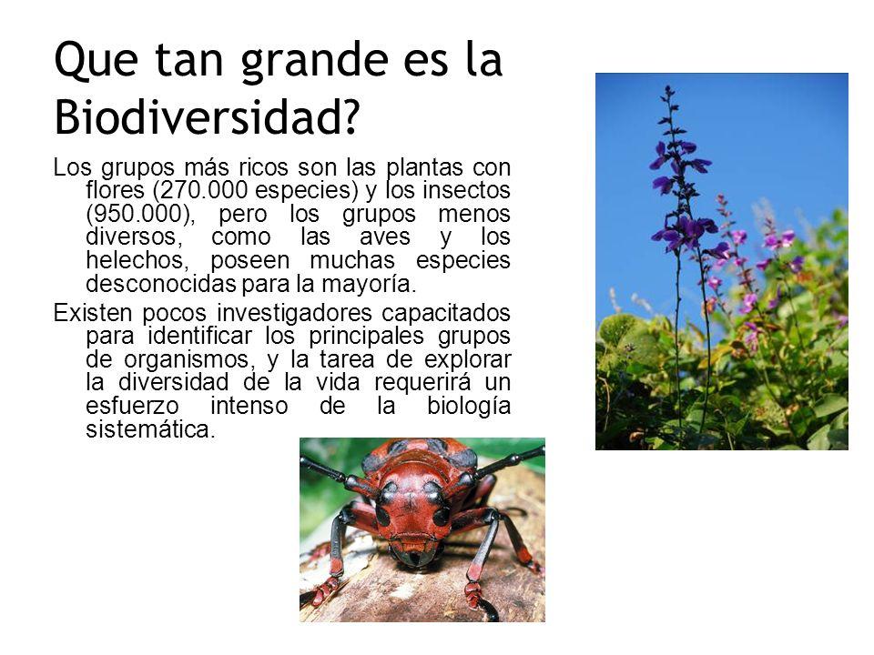 Que tan grande es la Biodiversidad? Los grupos más ricos son las plantas con flores (270.000 especies) y los insectos (950.000), pero los grupos menos