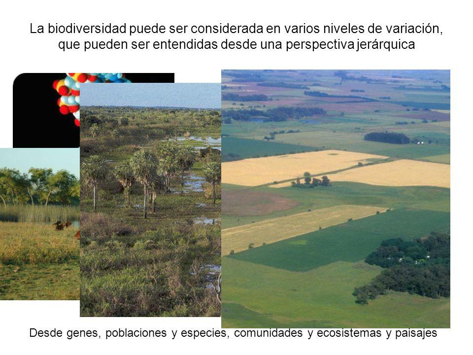 La biodiversidad puede ser considerada en varios niveles de variación, que pueden ser entendidas desde una perspectiva jerárquica Desde genes, poblaci