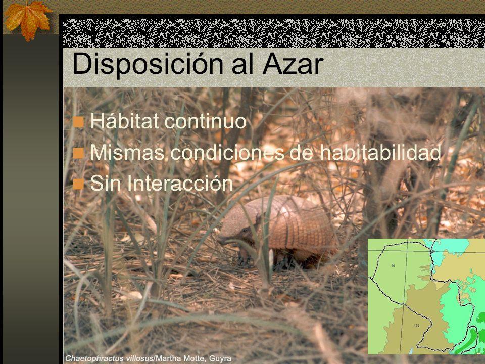 Disposición Uniforme Todos los puntos en el espacio tienen la misma posibilidad de ser ocupados por un organismo La presencia de un individuo en cierto punto en el espacio sí afecta la ubicación de otro individuo en el espacio