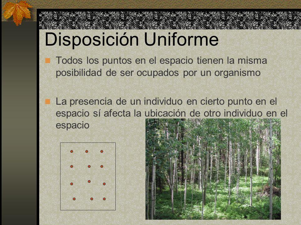Disposición Uniforme Todos los puntos en el espacio tienen la misma posibilidad de ser ocupados por un organismo La presencia de un individuo en ciert
