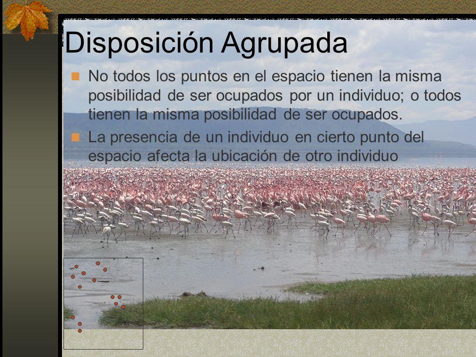 Disposición Agrupada Puede existir o no condiciones homogéneas del hábitat Interacciones positivas Grupos de migración Agrupaciones en dormideros Agrupaciones para reproducción Agrupaciones sociales