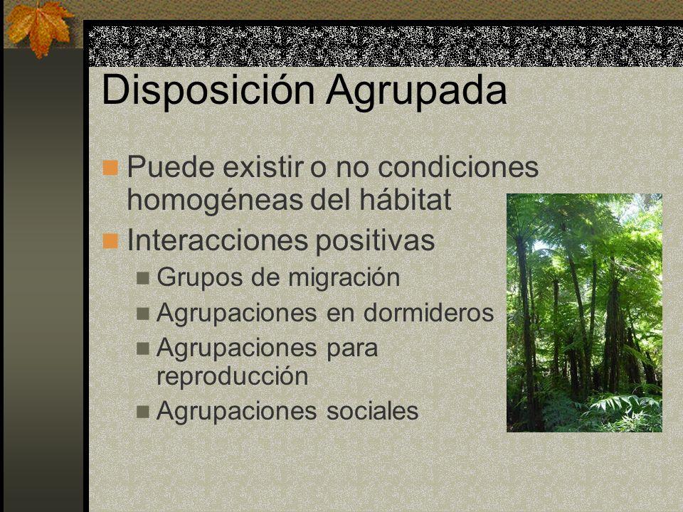 Disposición Agrupada Puede existir o no condiciones homogéneas del hábitat Interacciones positivas Grupos de migración Agrupaciones en dormideros Agru