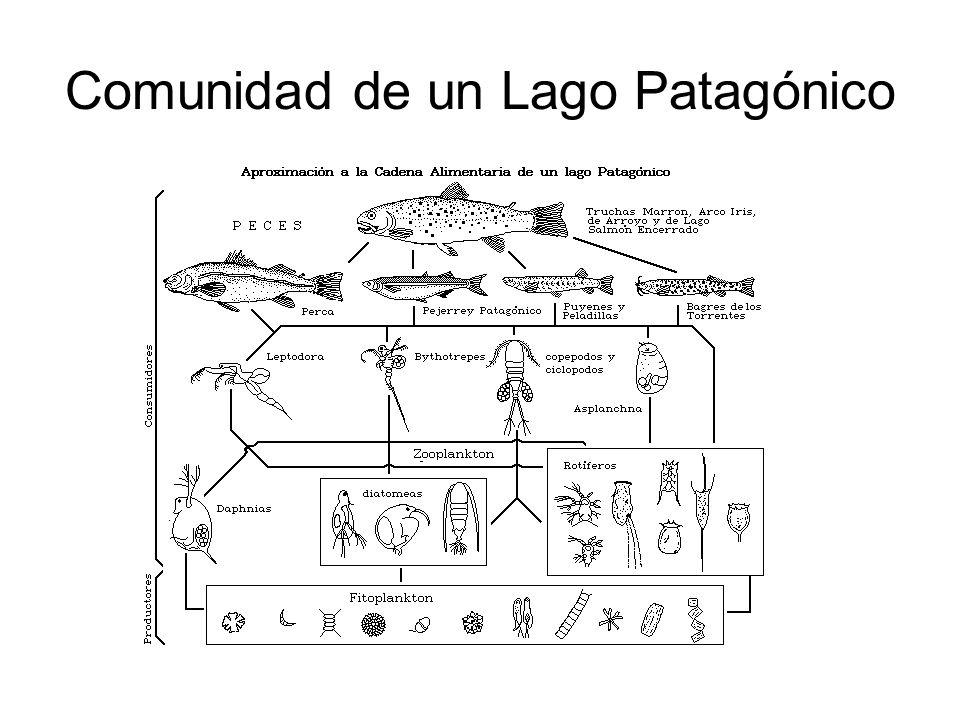 Comunidad de un Lago Patagónico