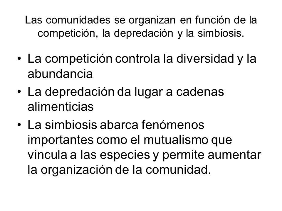 Las comunidades se organizan en función de la competición, la depredación y la simbiosis. La competición controla la diversidad y la abundancia La dep