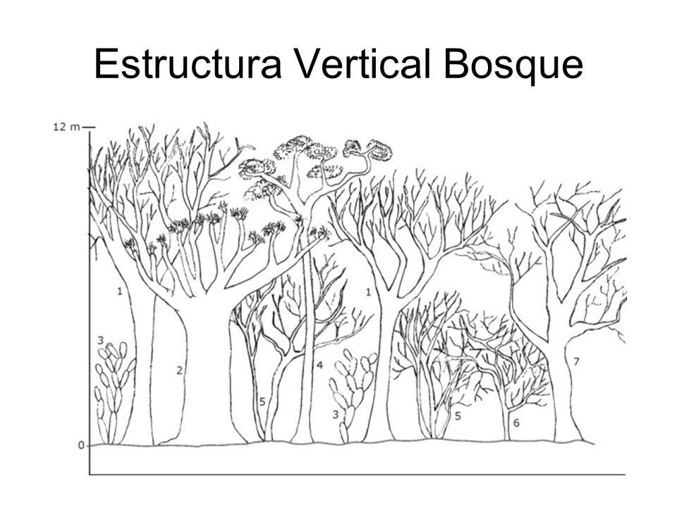 Valor de Importancia Se realizan en lotes y se determinan los siguientes valores para cada una de las especies de plantas x: Densidad: es el número de individuos de una especie multiplicado por área (No.