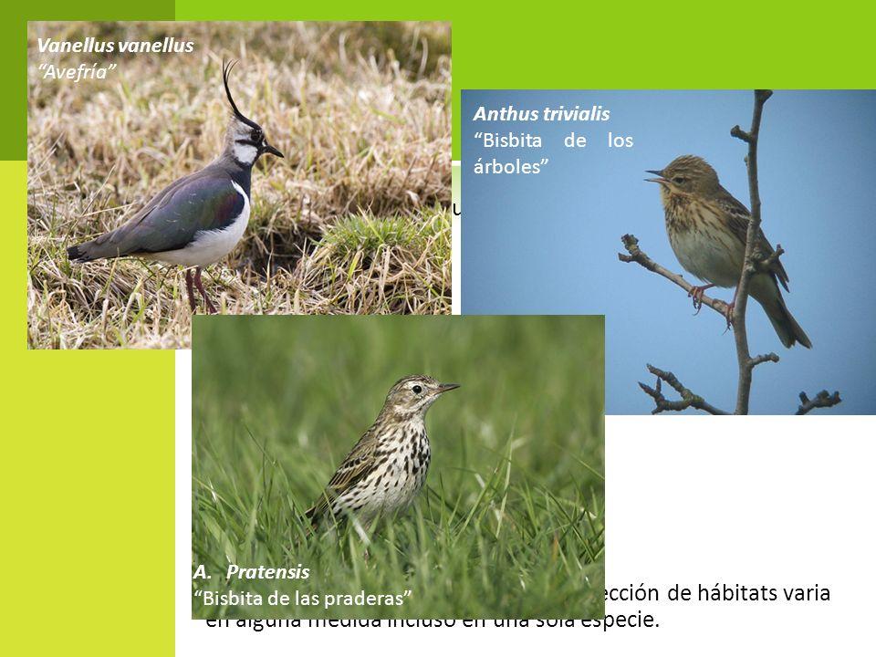 Según Lack (1933) esta distribución resulta de una selección de hábitat especifico que restringe a cada pájaro a una zona menor de la que podría ocupar.