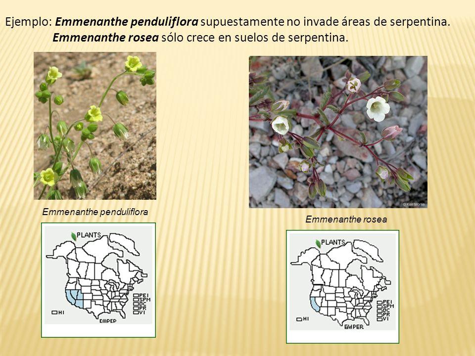Ejemplo: Emmenanthe penduliflora supuestamente no invade áreas de serpentina. Emmenanthe rosea sólo crece en suelos de serpentina. Emmenanthe pendulif