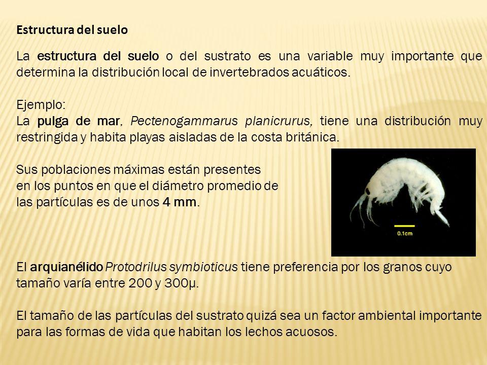 Estructura del suelo La estructura del suelo o del sustrato es una variable muy importante que determina la distribución local de invertebrados acuáti