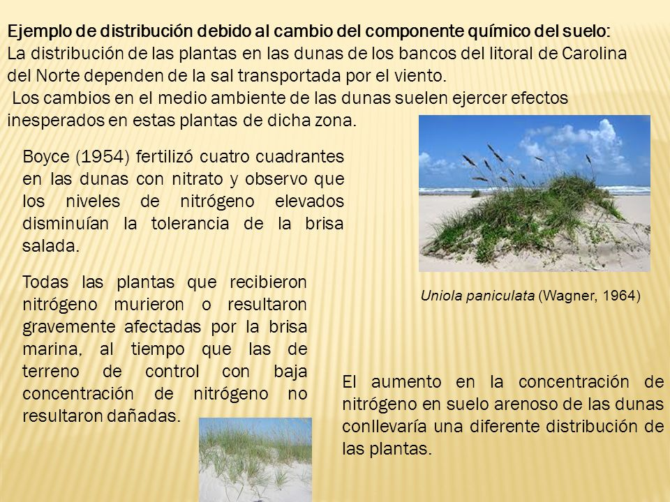 Ejemplo de distribución debido al cambio del componente químico del suelo: La distribución de las plantas en las dunas de los bancos del litoral de Ca