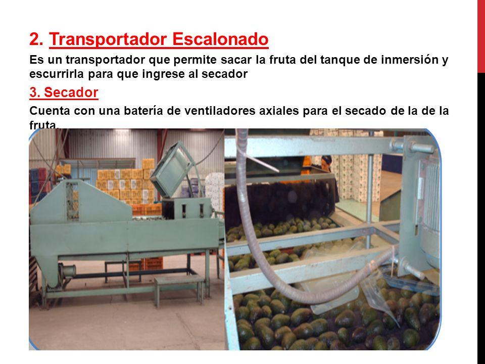 2. Transportador Escalonado Es un transportador que permite sacar la fruta del tanque de inmersión y escurrirla para que ingrese al secador 3. Secador