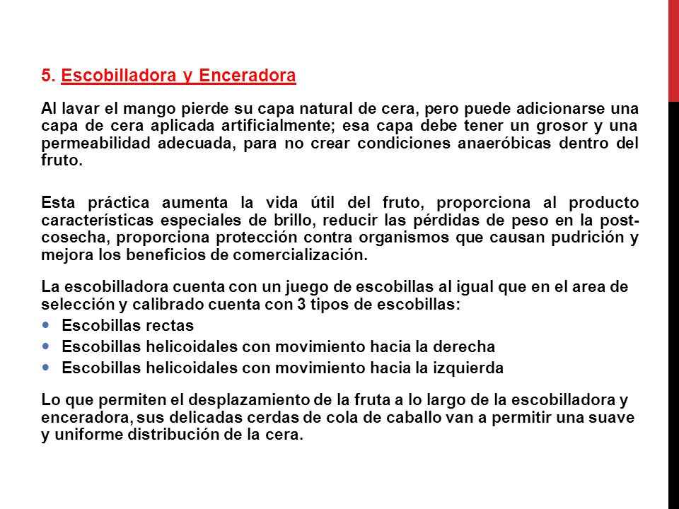 TRATAMIENTO HIDROTERMICO El mango para exportación a EEUU.
