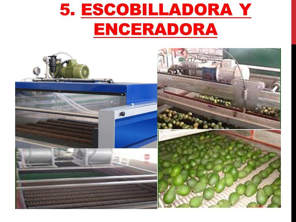 TRATAMIENTO HIDROTERMICO Siendo esta la única alternativa de tratamiento cuarentenario para el mango de exportación a los Estados Unidos, Japón, Chile y Nueva Zelanda.