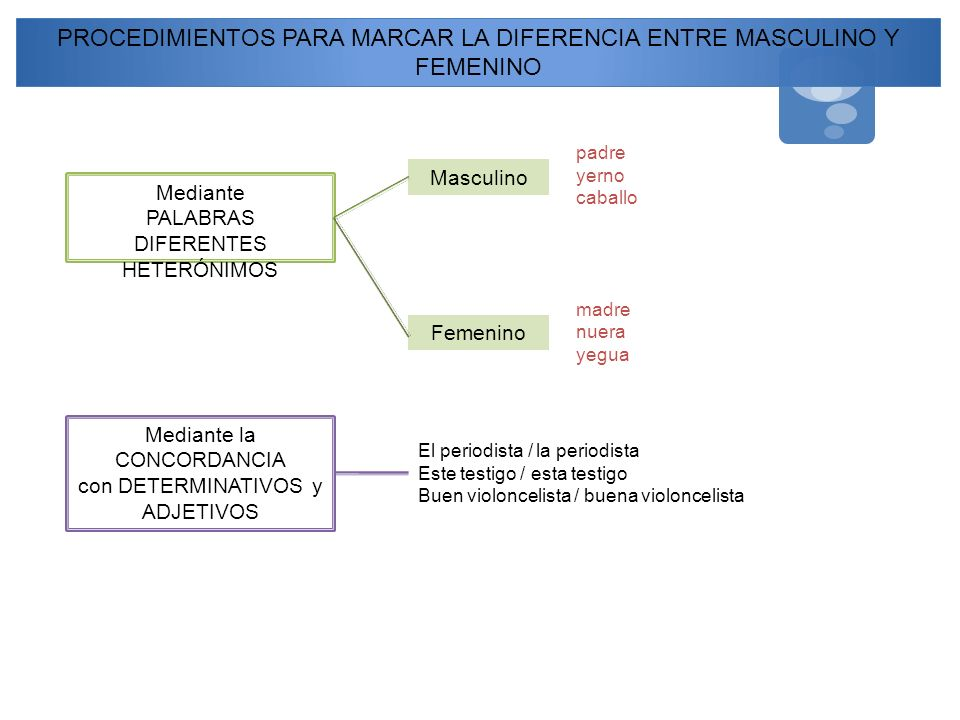 PROCEDIMIENTOS PARA MARCAR LA DIFERENCIA ENTRE MASCULINO Y FEMENINO Mediante PALABRAS DIFERENTES HETERÓNIMOS Masculino Femenino Mediante la CONCORDANC