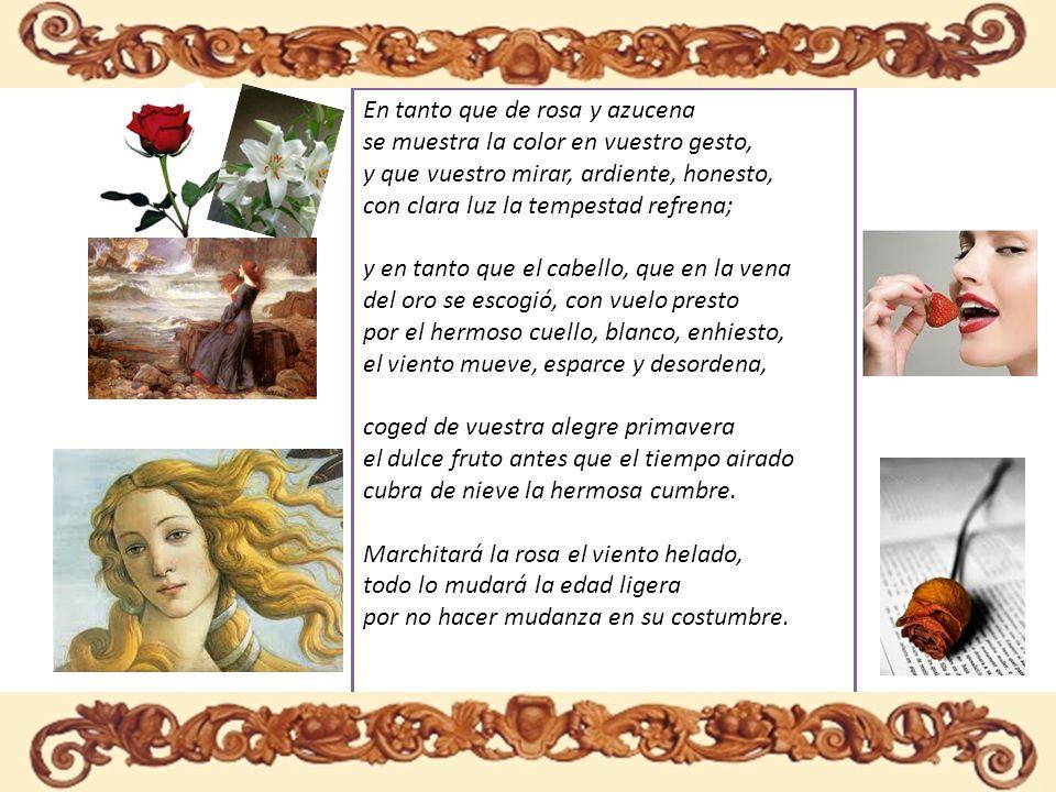 En tanto que de rosa y azucena se muestra la color en vuestro gesto, y que vuestro mirar, ardiente, honesto, con clara luz la tempestad refrena; y en