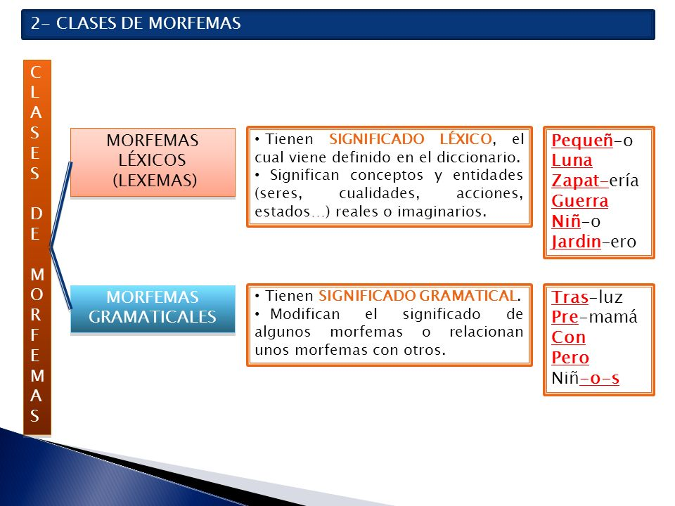 TIPOS DE MORFEMAS GRAMATICALES MORFEMAS GRAMATICALES MORFEMAS GRAMATICALES MORFEMAS INDEPENDIENTES Constituyen por sí solos una palabra.