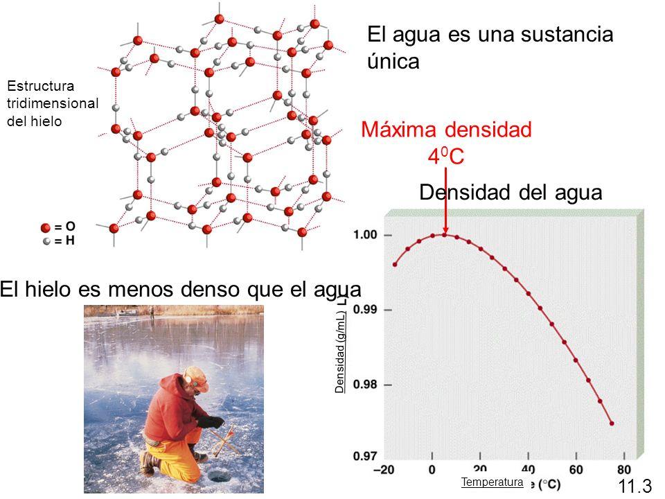 Máxima densidad 4 0 C El hielo es menos denso que el agua Densidad del agua 11.3 El agua es una sustancia única Temperatura Densidad (g/mL) Estructura