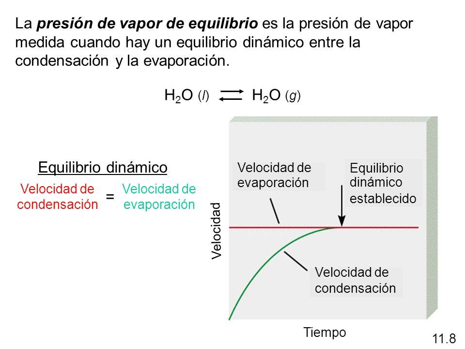La presión de vapor de equilibrio es la presión de vapor medida cuando hay un equilibrio dinámico entre la condensación y la evaporación. H 2 O (l) H
