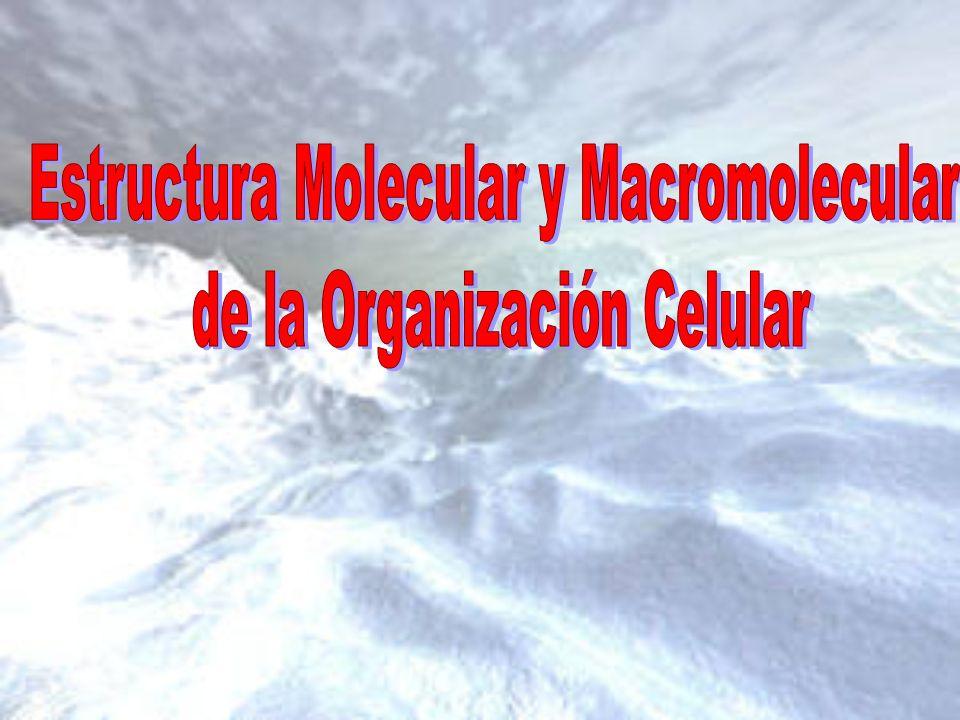 La materia de los seres vivos se clasifica en dos grandes grupos: 1.Compuestos inorgánicos: Agua Sales Minerales 2.
