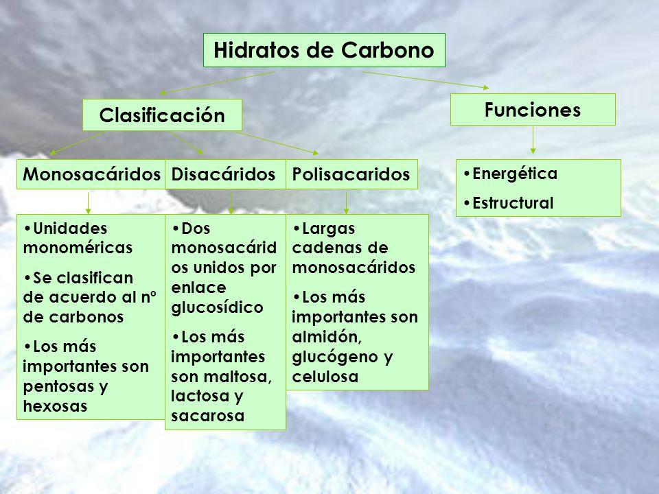 Hidratos de Carbono Clasificación Funciones Monosacáridos DisacáridosPolisacaridos Unidades monoméricas Se clasifican de acuerdo al nº de carbonos Los