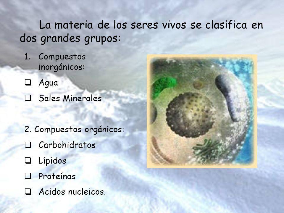 La materia de los seres vivos se clasifica en dos grandes grupos: 1.Compuestos inorgánicos: Agua Sales Minerales 2. Compuestos orgánicos: Carbohidrato