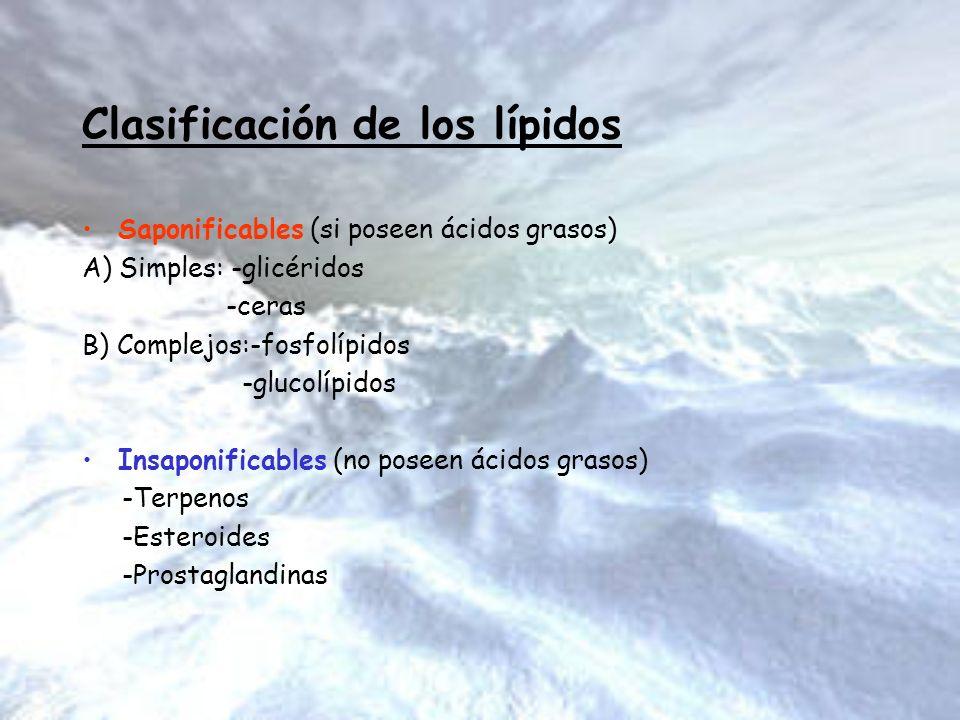 Clasificación de los lípidos Saponificables (si poseen ácidos grasos) A) Simples: -glicéridos -ceras B) Complejos:-fosfolípidos -glucolípidos Insaponi