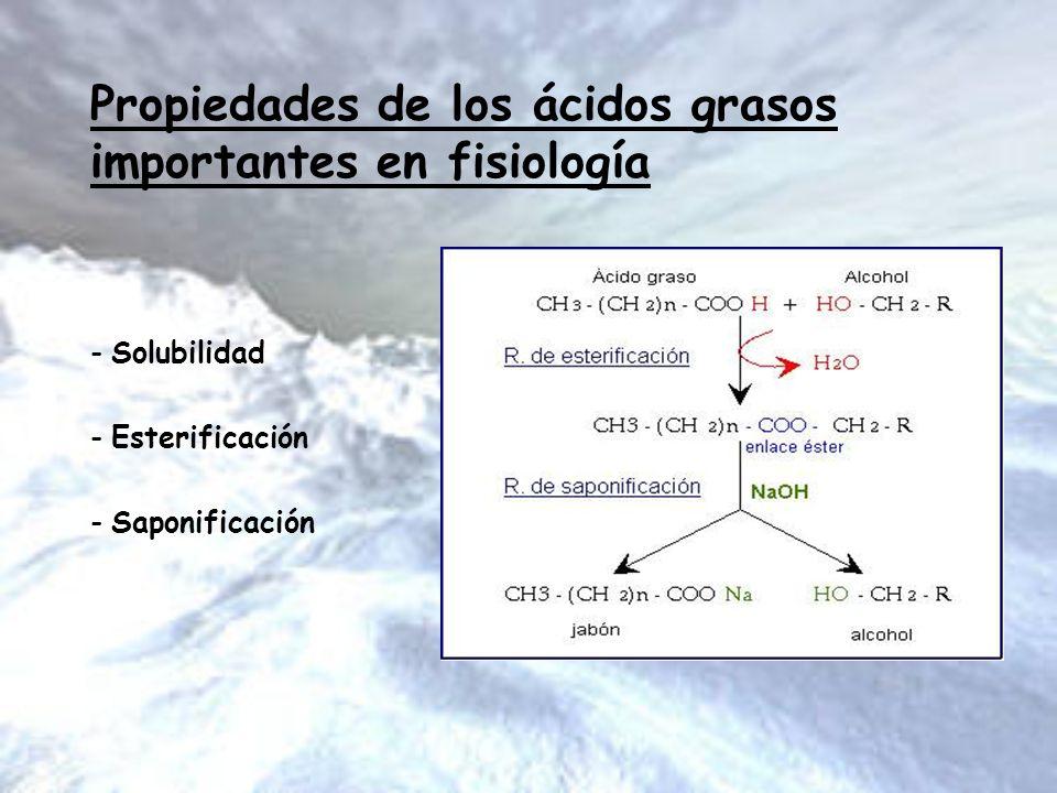 Propiedades de los ácidos grasos importantes en fisiología - Solubilidad - Esterificación - Saponificación