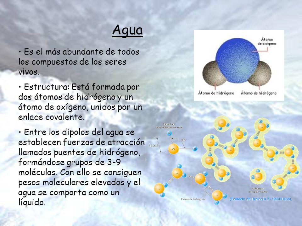 Agua Es el más abundante de todos los compuestos de los seres vivos. Estructura: Está formada por dos átomos de hidrógeno y un átomo de oxígeno, unido