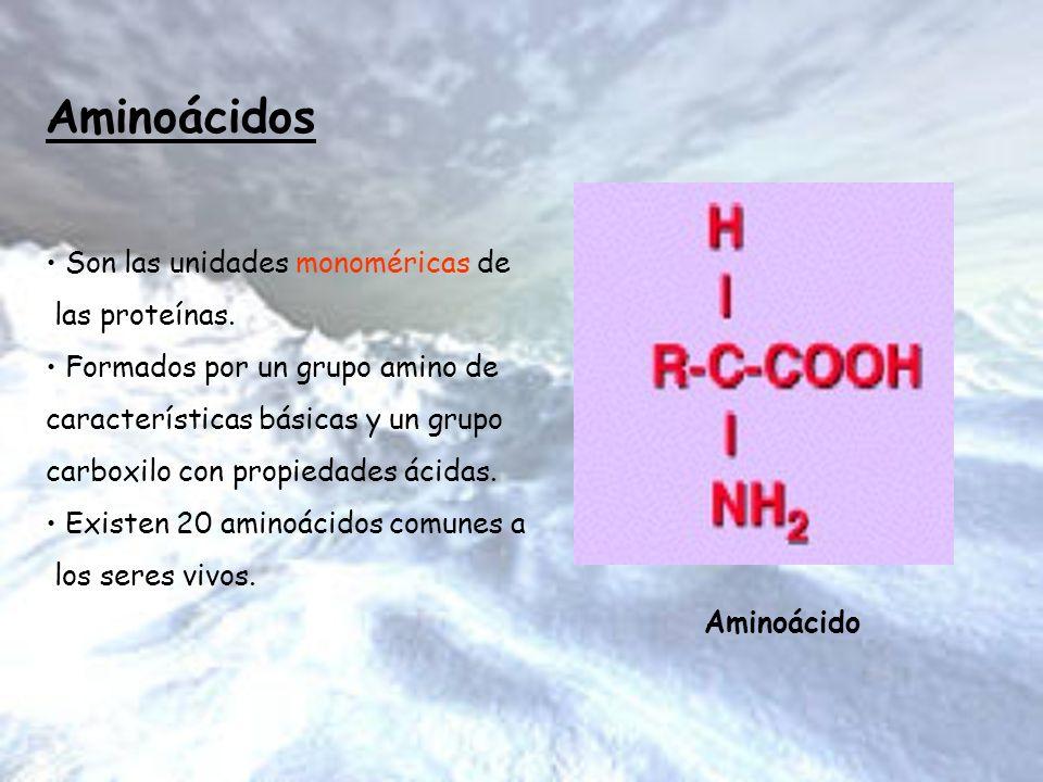 Aminoácidos Son las unidades monoméricas de las proteínas. Formados por un grupo amino de características básicas y un grupo carboxilo con propiedades