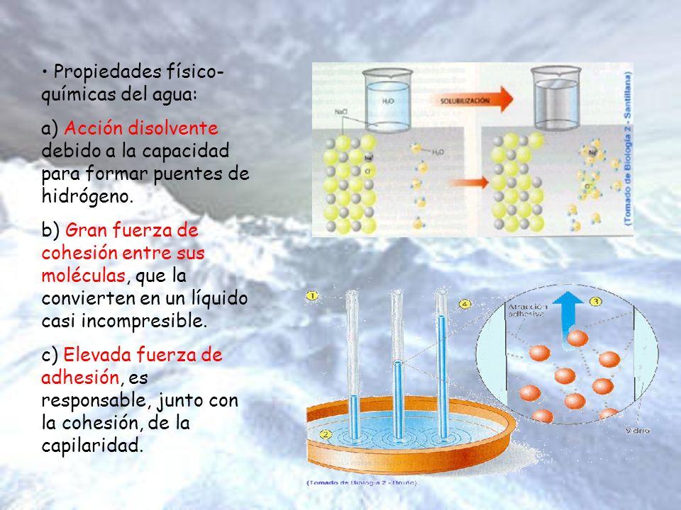Propiedades físico- químicas del agua: a) Acción disolvente debido a la capacidad para formar puentes de hidrógeno. b) Gran fuerza de cohesión entre s