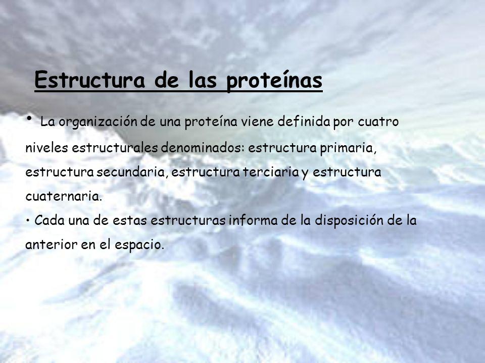 Estructura de las proteínas La organización de una proteína viene definida por cuatro niveles estructurales denominados: estructura primaria, estructu