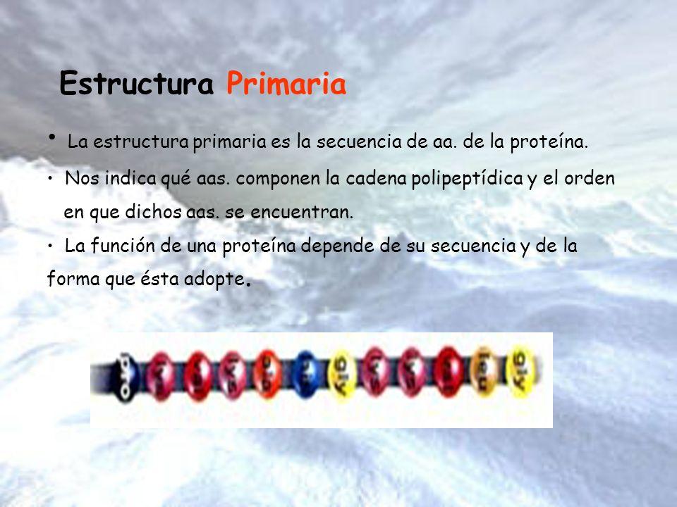 Estructura Primaria La estructura primaria es la secuencia de aa. de la proteína. Nos indica qué aas. componen la cadena polipeptídica y el orden en q