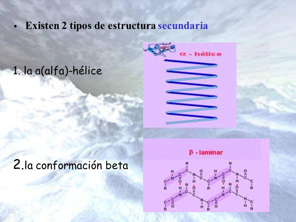 1. la a(alfa)-hélice 2. la conformación beta Existen 2 tipos de estructura secundaria