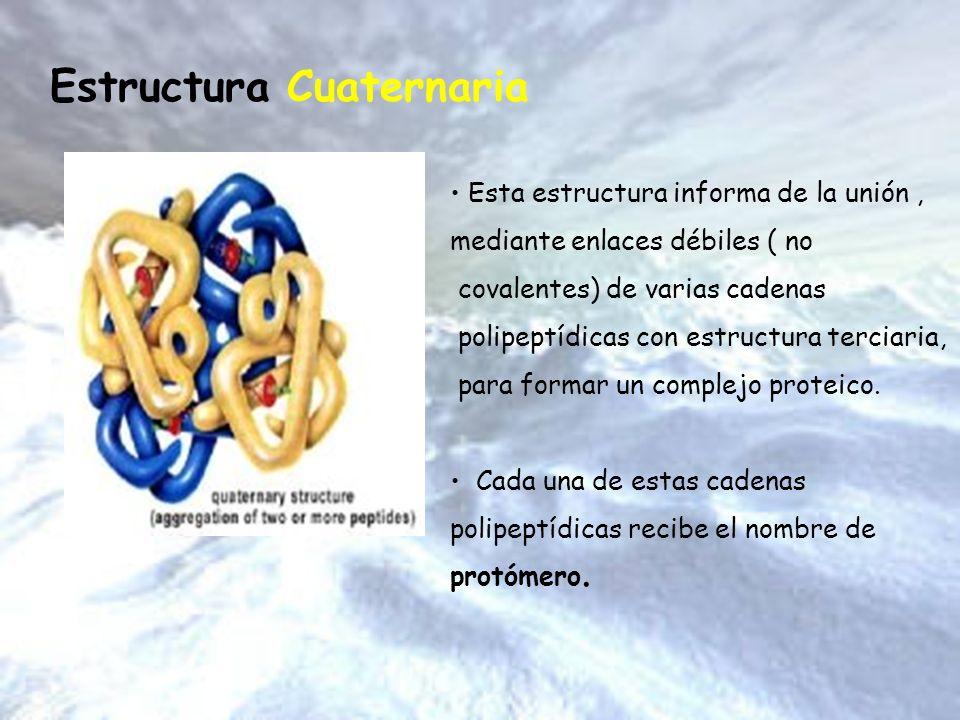 Esta estructura informa de la unión, mediante enlaces débiles ( no covalentes) de varias cadenas polipeptídicas con estructura terciaria, para formar