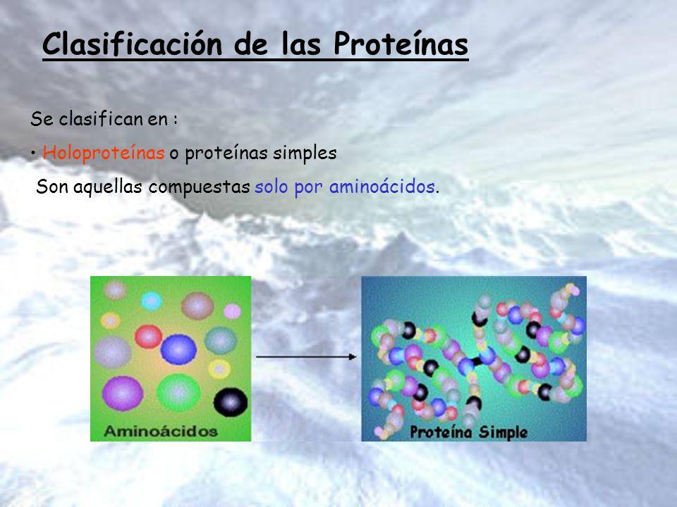Clasificación de las Proteínas Se clasifican en : Holoproteínas o proteínas simples Son aquellas compuestas solo por aminoácidos.