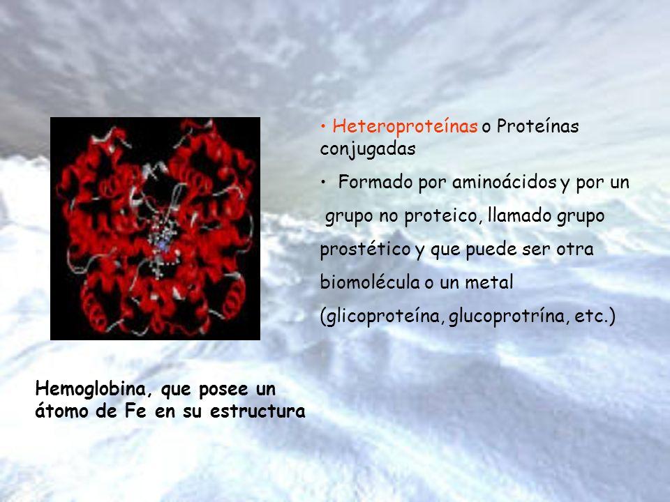 Heteroproteínas o Proteínas conjugadas Formado por aminoácidos y por un grupo no proteico, llamado grupo prostético y que puede ser otra biomolécula o