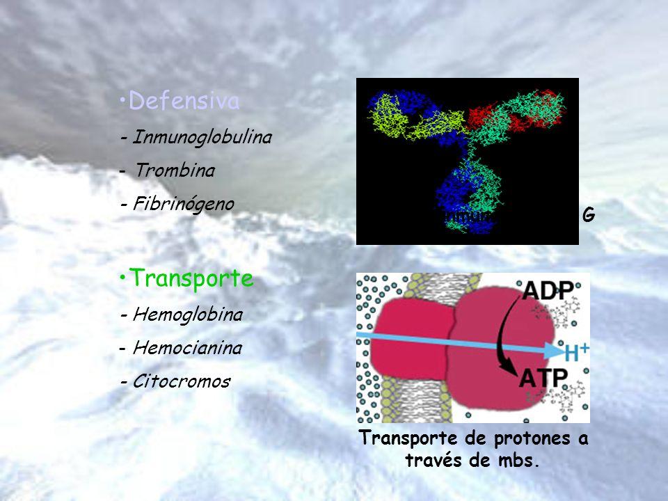 Defensiva - Inmunoglobulina - Trombina - Fibrinógeno Transporte - Hemoglobina - Hemocianina - Citocromos Inmunoglobulina G Transporte de protones a tr