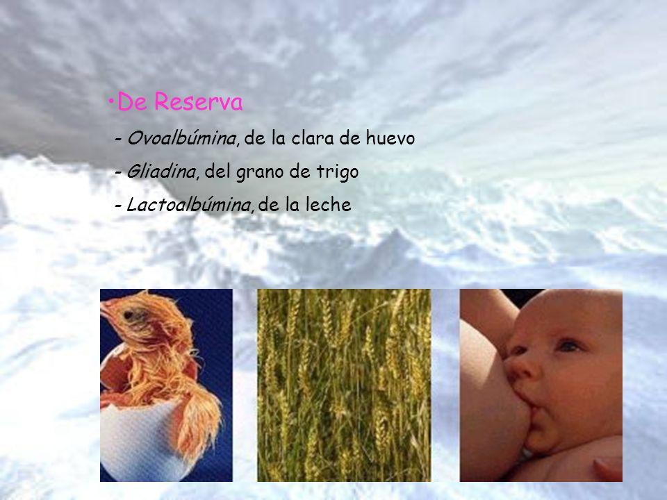 De Reserva - Ovoalbúmina, de la clara de huevo - Gliadina, del grano de trigo - Lactoalbúmina, de la leche