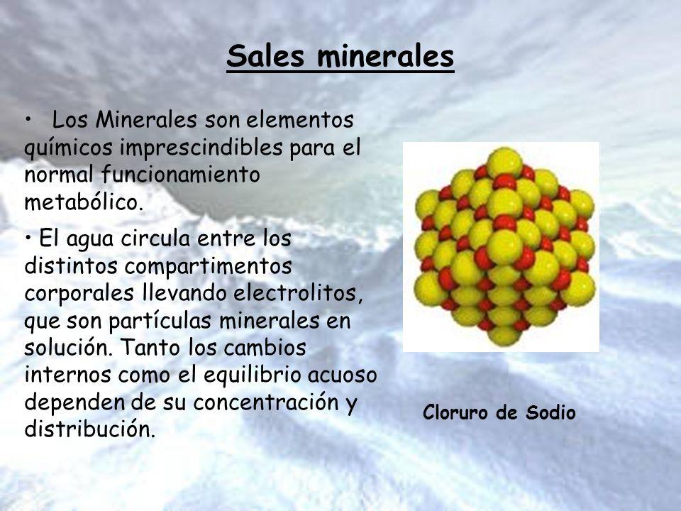 Sales minerales Los Minerales son elementos químicos imprescindibles para el normal funcionamiento metabólico. El agua circula entre los distintos com
