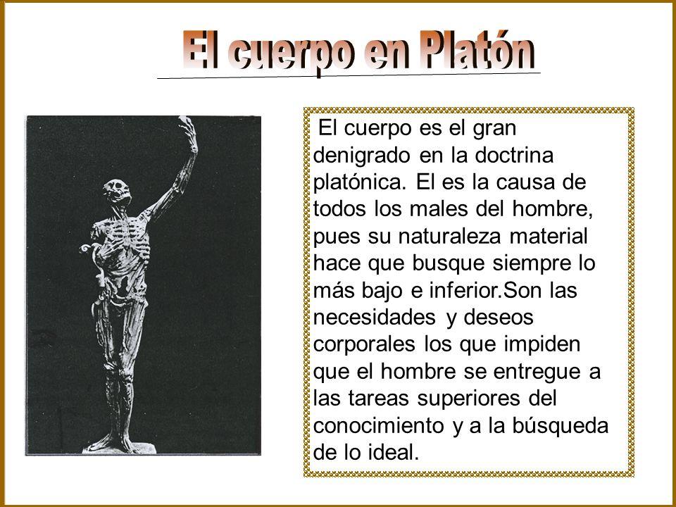 El cuerpo es el gran denigrado en la doctrina platónica. El es la causa de todos los males del hombre, pues su naturaleza material hace que busque sie