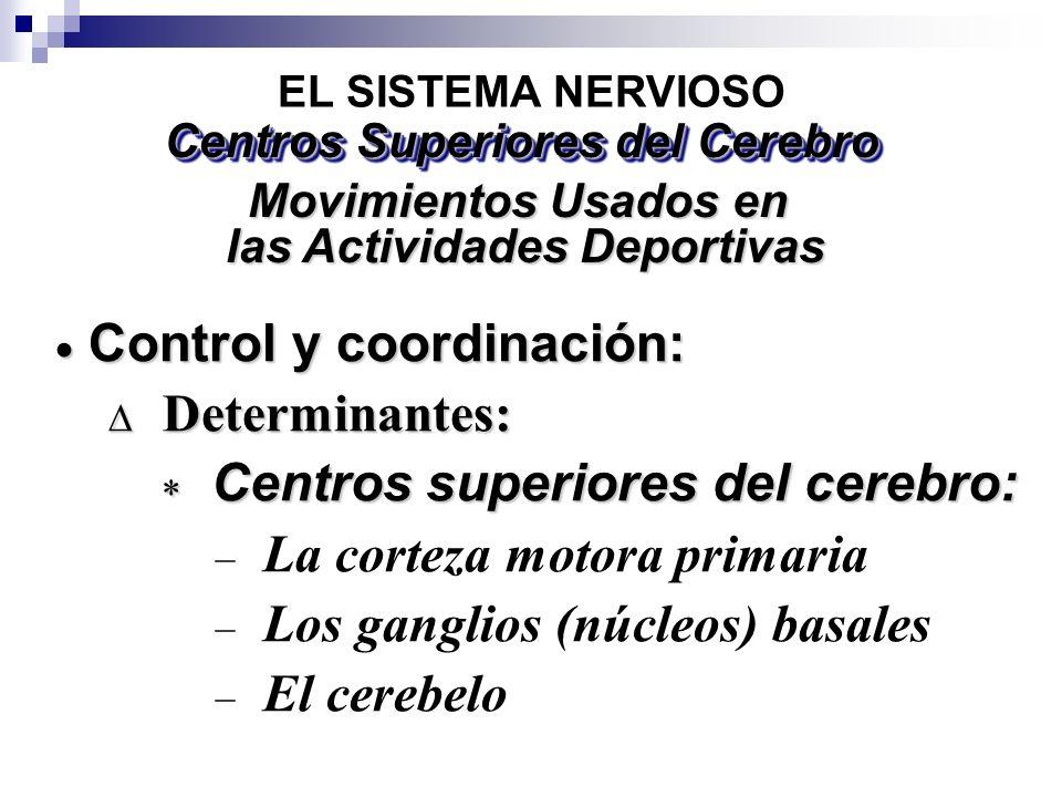 EL SISTEMA NERVIOSO Centros Superiores del Cerebro Movimientos Usados en las Actividades Deportivas las Actividades Deportivas Control y coordinación: