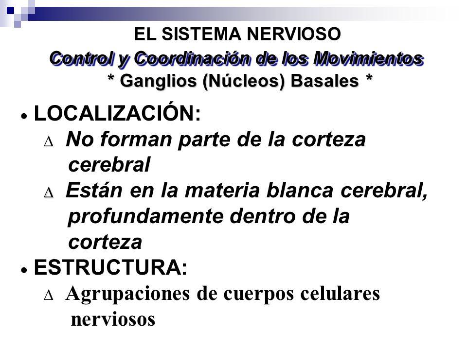 * Ganglios (Núcleos) Basales * EL SISTEMA NERVIOSO LOCALIZACIÓN: No forman parte de la corteza cerebral Están en la materia blanca cerebral, profundam