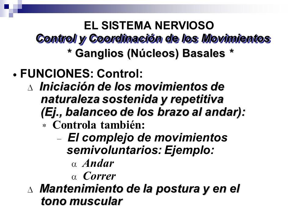 * Ganglios (Núcleos) Basales * EL SISTEMA NERVIOSO FUNCIONES: Control: Iniciación de los movimientos de naturaleza sostenida y repetitiva naturaleza s