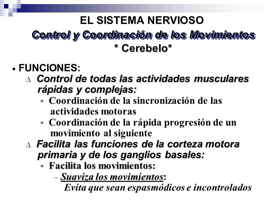 * Cerebelo* EL SISTEMA NERVIOSO FUNCIONES: Control de todas las actividades musculares rápidas y complejas: rápidas y complejas: Coordinación de la si