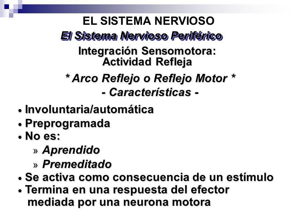 EL SISTEMA NERVIOSO Integración Sensomotora: Actividad Refleja El Sistema Nervioso Periférico Involuntaria/automática Involuntaria/automática Preprogr
