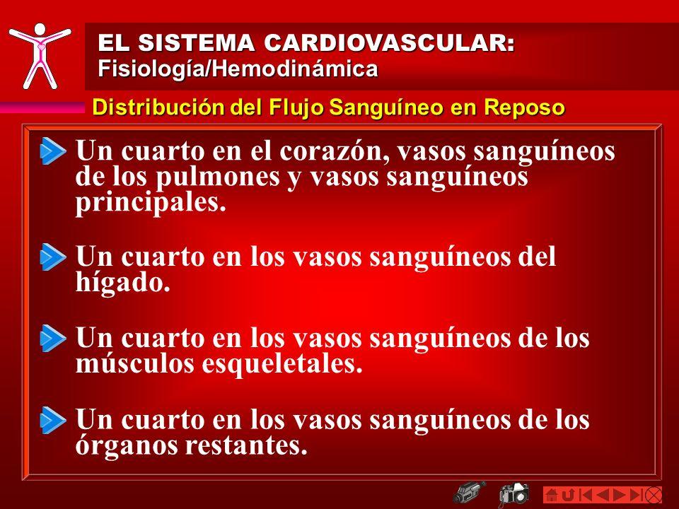 Distribución del Flujo Sanguíneo en Reposo EL SISTEMA CARDIOVASCULAR: Fisiología/Hemodinámica Un cuarto en el corazón, vasos sanguíneos de los pulmone