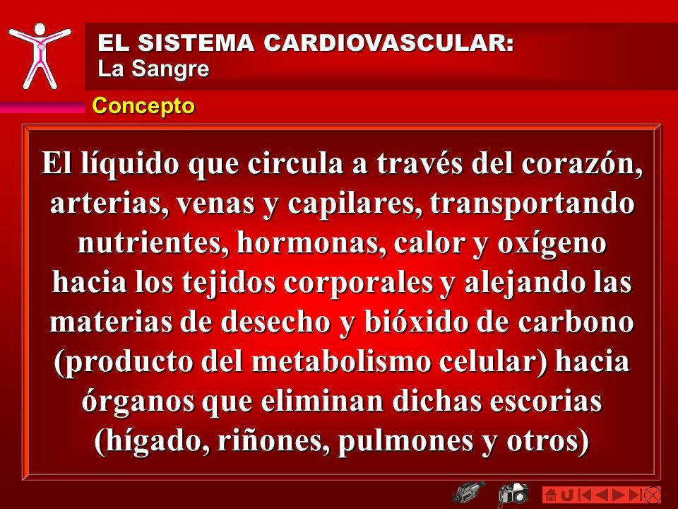 Concepto EL SISTEMA CARDIOVASCULAR: La Sangre El líquido que circula a través del corazón, arterias, venas y capilares, transportando nutrientes, horm