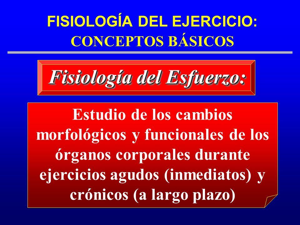 FISIOLOGÍA DEL EJERCICIO: CONCEPTOS BÁSICOS Fisiología del Esfuerzo: Estudio de los cambios morfológicos y funcionales de los órganos corporales duran