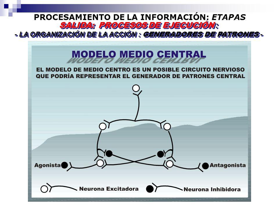 PROCESAMIENTO DE LA INFORMACIÓN: ETAPAS SALIDA: PROCESOS DE EJECUCIÓN : - LA ORGANIZACIÓN DE LA ACCIÓN : GENERADORES DE PATRONES - SALIDA: PROCESOS DE EJECUCIÓN : - LA ORGANIZACIÓN DE LA ACCIÓN : GENERADORES DE PATRONES -