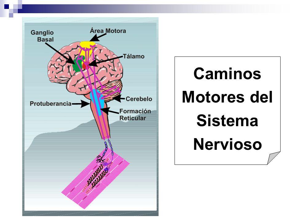Caminos Motores del Sistema Nervioso
